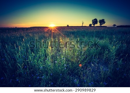 Vintage photo of beautiful landscape of green rye field at sunset. Agricultural countryside. - stock photo