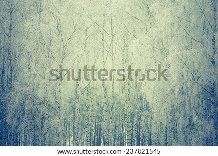 vintage photo of birch forest at winter - stock photo