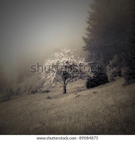 vintage photo of blossom apple tree - stock photo
