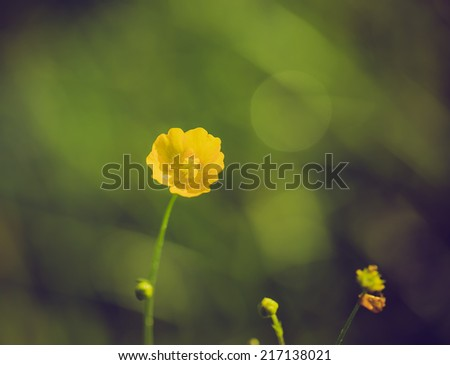 vintage photo of buttercups flowers - stock photo
