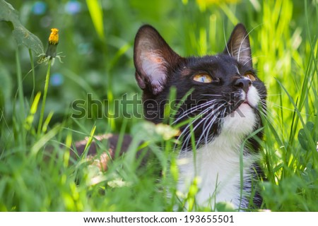 vintage photo of cat in grass. cat portrait - stock photo