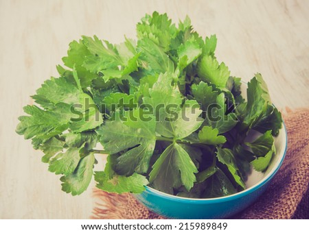 vintage photo of celery leaves - stock photo