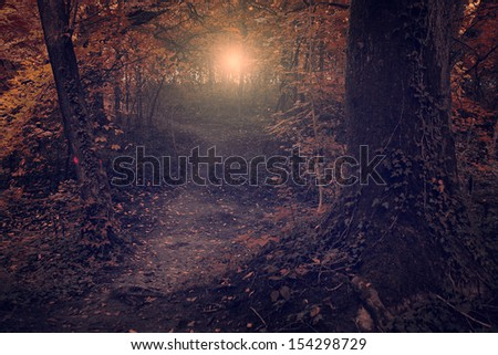 Vintage photo of dark forest - stock photo