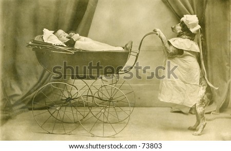 Vintage photo of dog pushing a baby carriage - stock photo