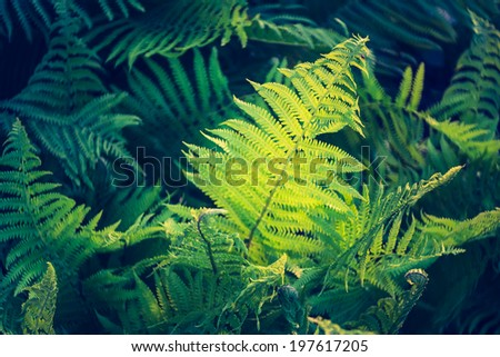 vintage photo of fern - stock photo