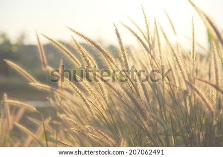 Vintage photo of flowers grass