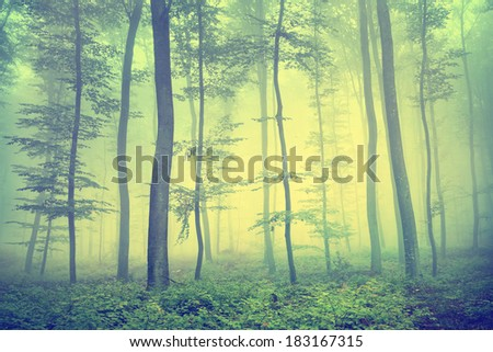 Vintage photo of foggy spring forest. - stock photo