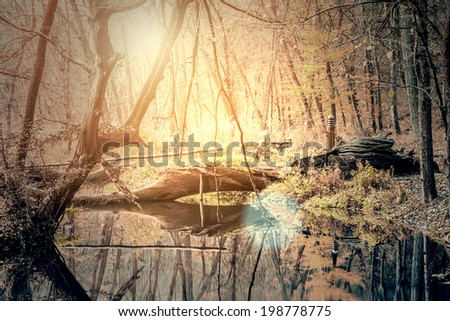 Vintage photo of forest - stock photo