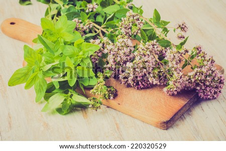 vintage photo of Fresh oregano flowers