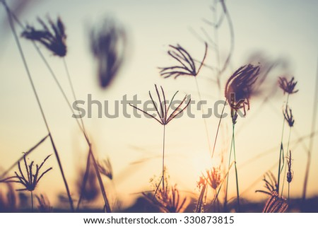 Vintage photo of grasses at sunset