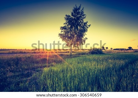 Vintage photo of green field landscape photographed in late spring. Polish green field with old tree with vintage mood effect. - stock photo