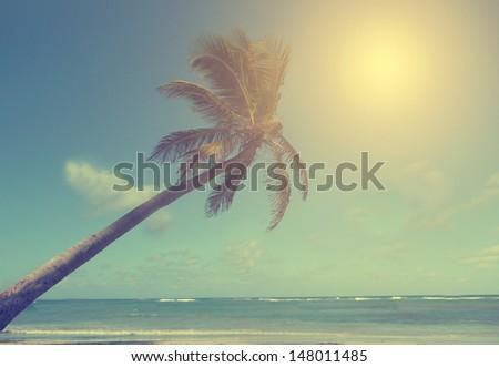 Vintage photo of huge palm tree - stock photo