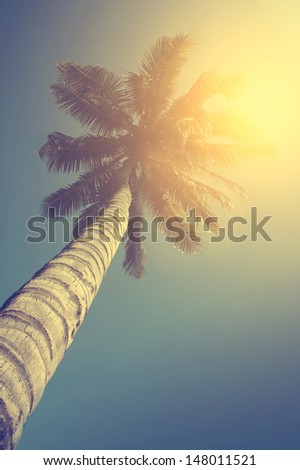 Vintage photo of huge palm tree - stock photo