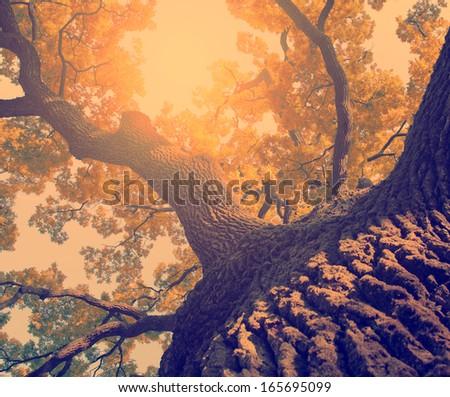 Vintage photo of huge tree - stock photo