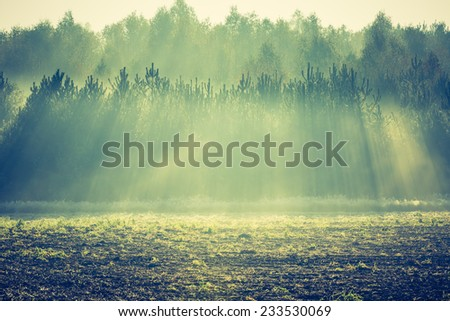 vintage photo of landscape with sunbeams over small pine forest - stock photo