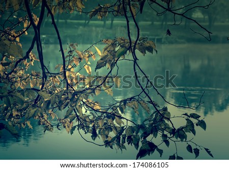 Vintage photo of leaves - stock photo