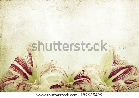 Vintage photo of lilly flowers - stock photo