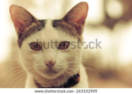 Vintage photo of little cat - stock photo