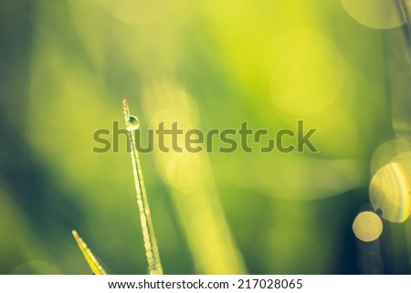 vintage photo of morning wet grass