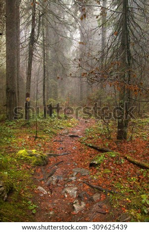Vintage photo of pathway through the autumn forest - stock photo