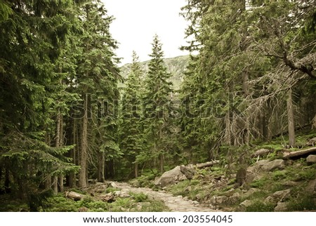 Vintage photo of pine forest. - stock photo