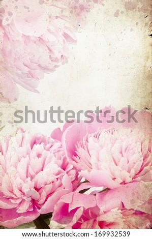 Vintage photo of pink peony - stock photo