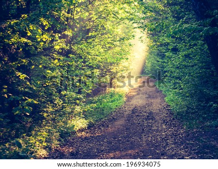 vintage photo of road in forest - stock photo