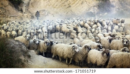 Vintage photo of shepherd herding his flock of sheep  - stock photo