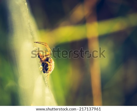 vintage photo of spider on web