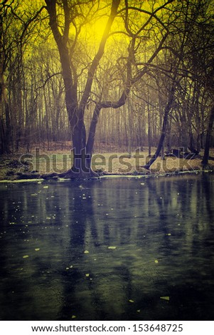 Vintage photo of spooky forest - stock photo