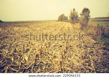 vintage photo of stubble field landscape
