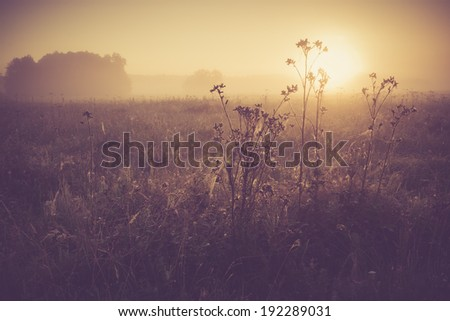 vintage photo of summer meadow at sunset. - stock photo