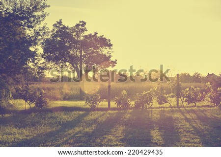 Vintage photo of vineyard in sunset - stock photo