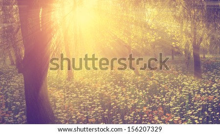 Vintage photo of wild flower field in sunset - stock photo