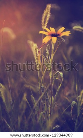 Vintage photo of wild flower in sunset