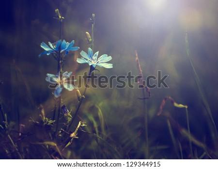 Vintage photo of wild flower in sunset - stock photo