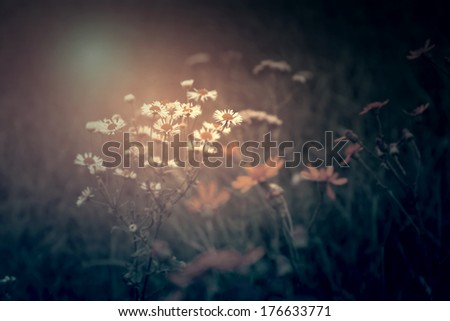 Vintage photo of wild flowers - stock photo