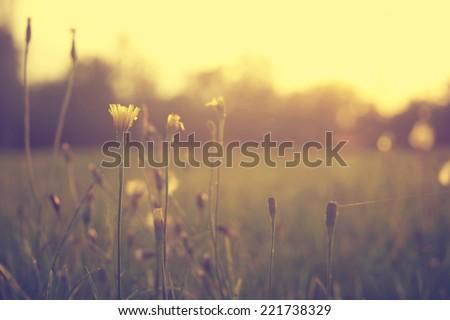 Vintage photo of wild flowers - stock photo