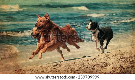 vintage photograph of a dog playing in the beach - stock photo