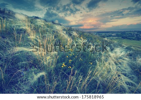 Vintage picture. Beautiful sunset with a feather grass in a wind