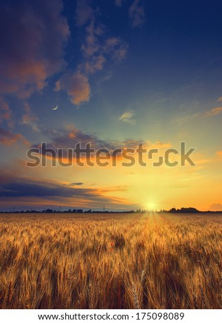 Vintage picture. Cloudy sunset in a wheat field - stock photo