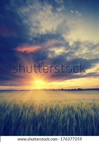 Vintage picture. Cloudy sunset in a wheat field with a moon and beautiful red clouds