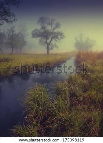 Vintage picture. Foggy morning in a river valley with a beautiful tree  - stock photo