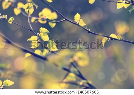 vintage plants - stock photo