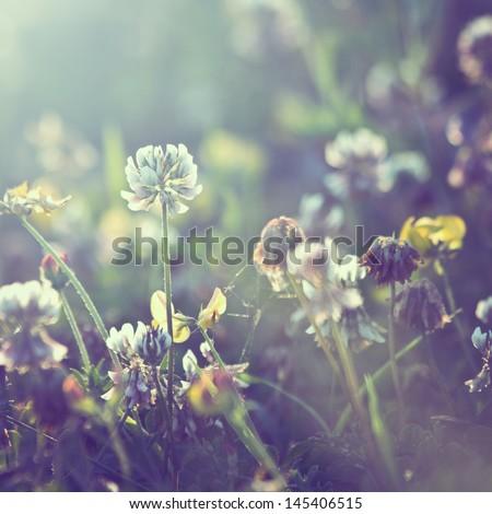 vintage plants dandelions background - stock photo
