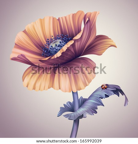 vintage poppy flower illustration - stock photo