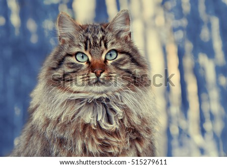 Vintage portrait of cute siberian cat sitting in the pine forest