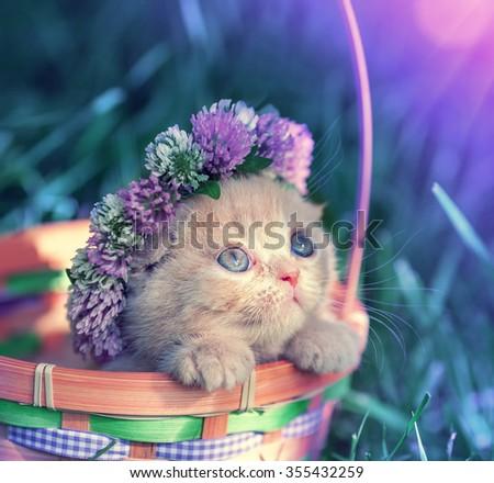 Vintage portrait of little kitten crowned clover chaplet - stock photo