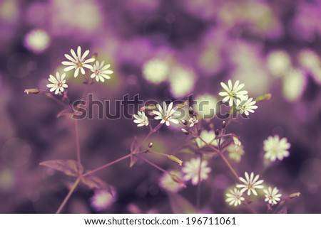 Vintage purple floral background with delicate flowers. - stock photo