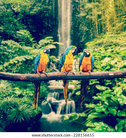 Vintage retro effect filtered hipster style travel image of Blue-and-Yellow Macaw (Ara ararauna), also known as the Blue-and-Gold Macaw - stock photo